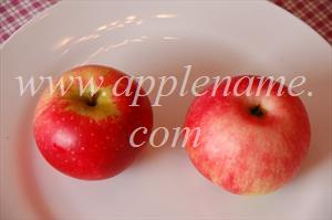 Discovery apple identification - Discovery apples (probable identification)