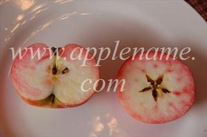 Discovery apple identification - Cross-section of Discovery showing typical red staining