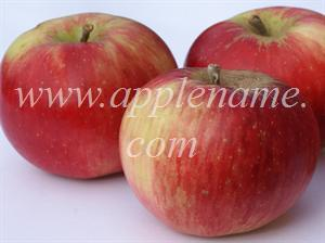 Akane apple identification - Akane