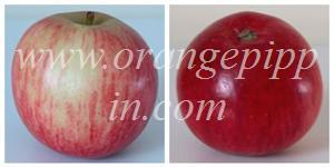 Worcester Pearmain colours (same apple, different sides)