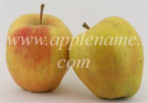 Esopus Spitzenburg apple identification - Esopus Spitzenberg