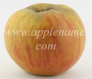 Ribston Pippin apple identification - Ribston Pippin