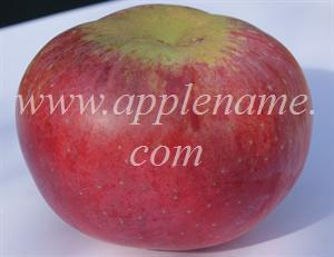 Wolf River apple identification - Wolf River
