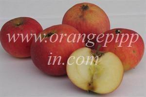 Apricot apples