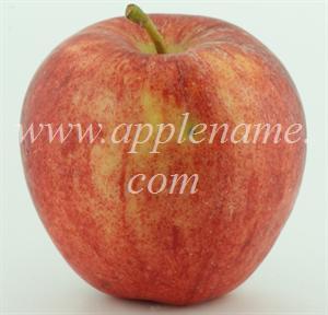 Gala apple identification - Galaxy Gala