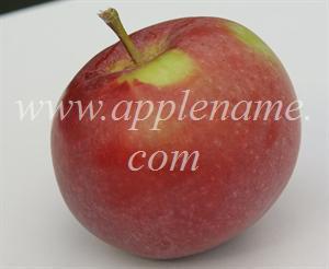 Fameuse apple identification - Fameuse