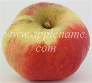 Jonathan apple identification - Jonathan