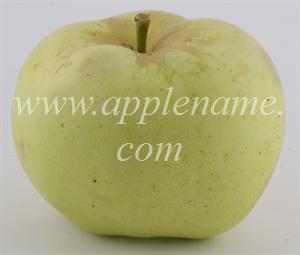 Winter Banana apple identification - Winter Banana