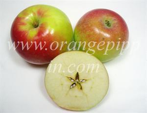 Zestar  identification photos from website visitorsZestar Apple Tree
