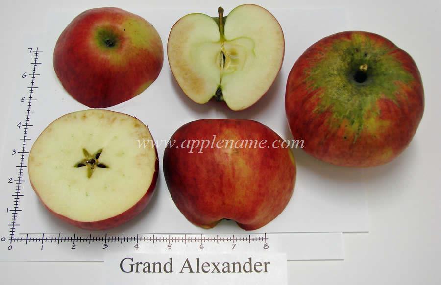 Alexander apple identification