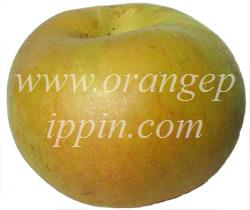 Ashmead's Kernel photo