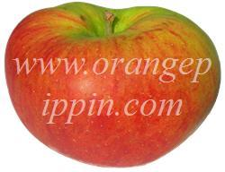 Blenheim Orange photo