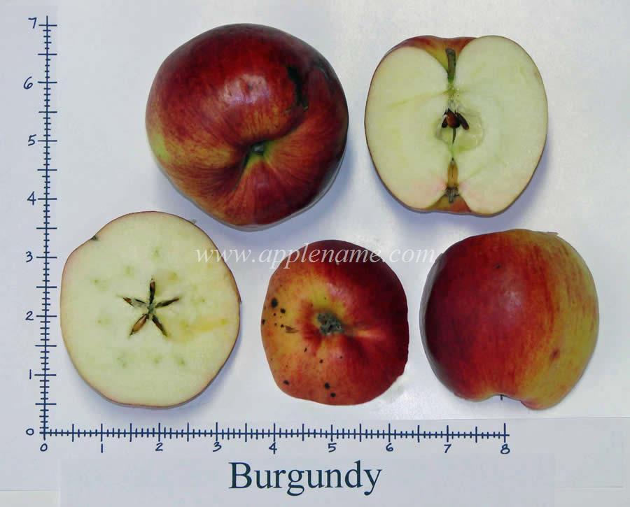Burgundy apple identification