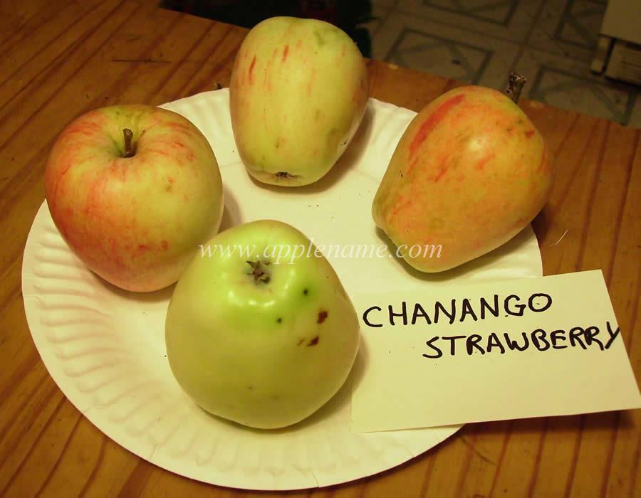 Chenango Strawberry apple identification