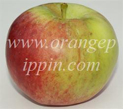 Cortland apple identification