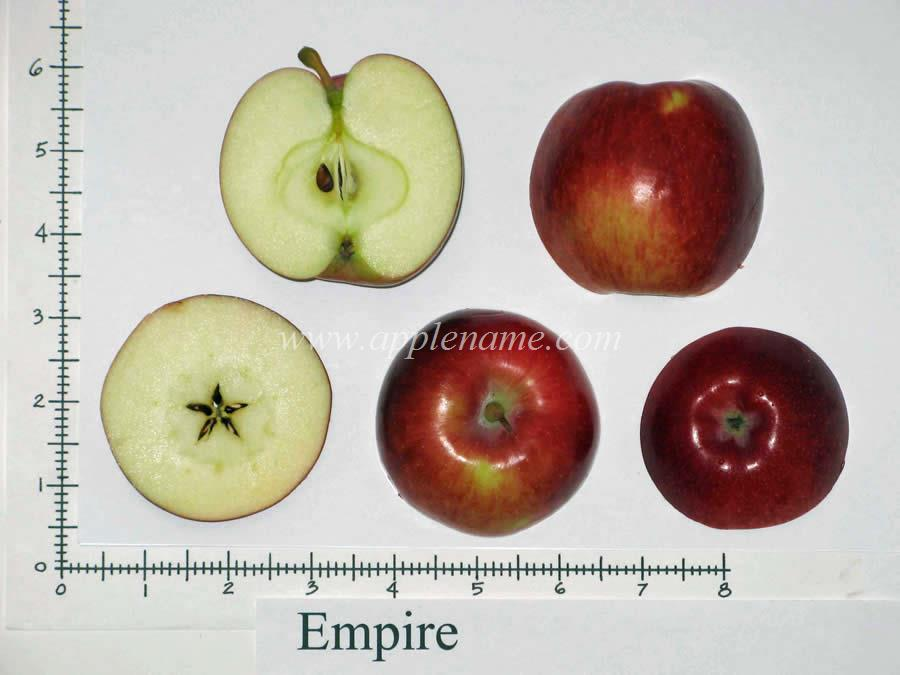 Empire apple identification