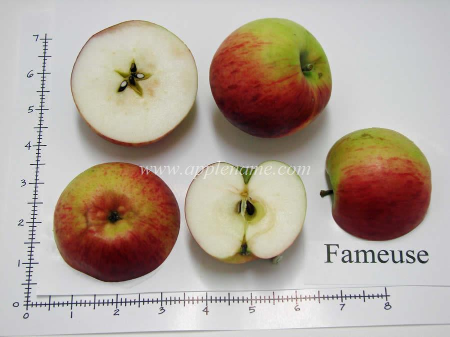 Fameuse apple identification