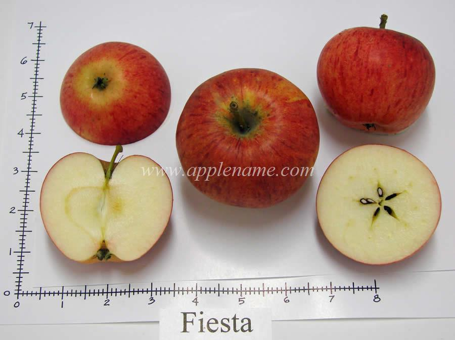 Fiesta apple identification