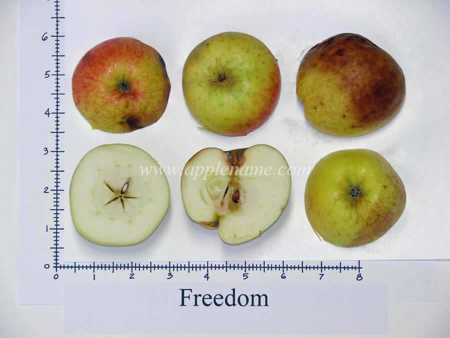 Freedom apple identification