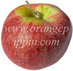 Gravenstein apple identification
