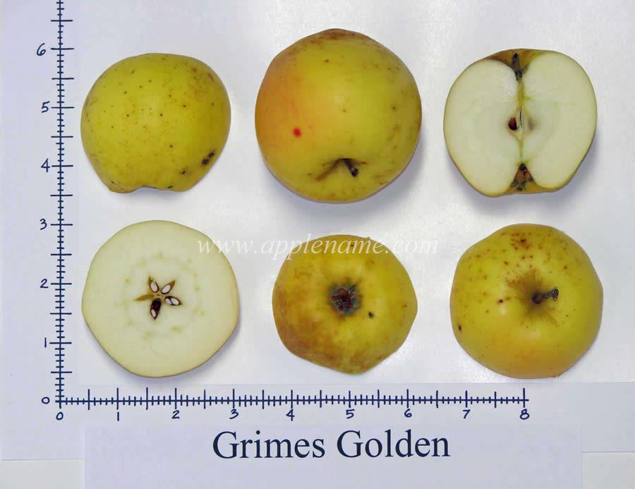 Grimes Golden apple identification