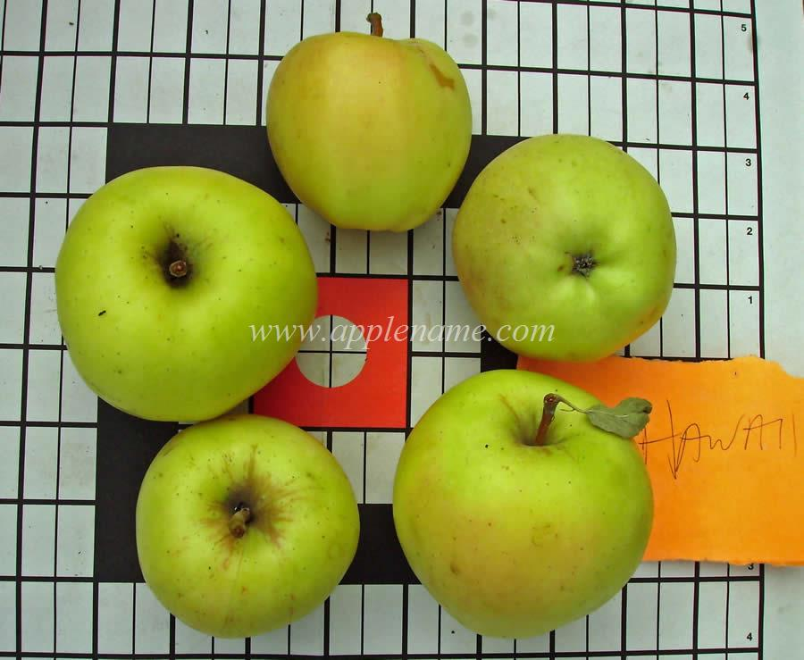 Hawaii apple identification