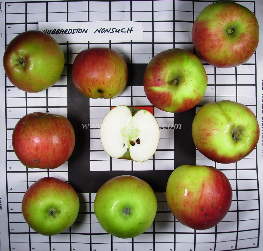 Hubbardston Nonesuch apple identification
