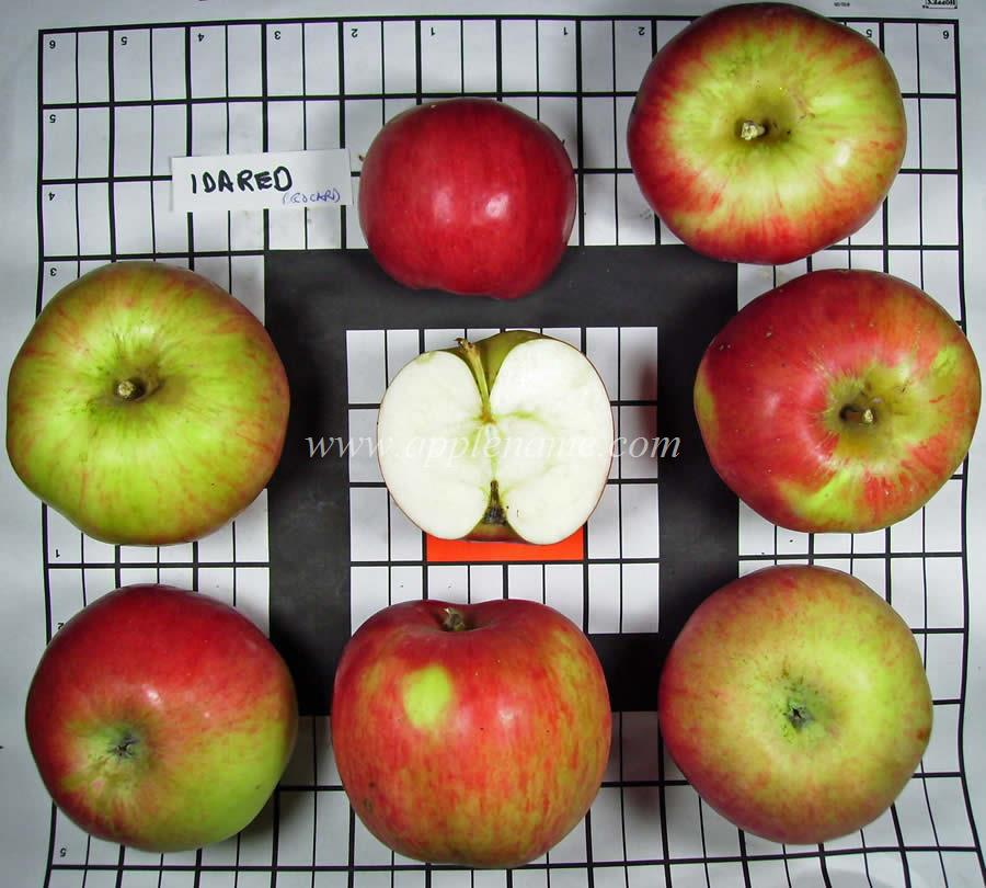 Idared apple identification