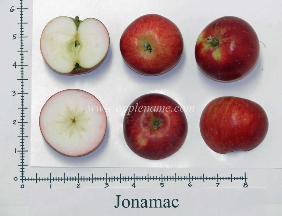 Jonamac apple identification