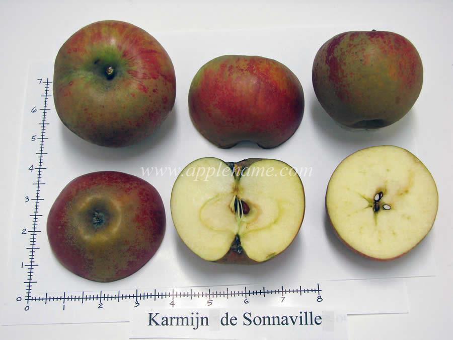 Karmijn de Sonnaville apple identification