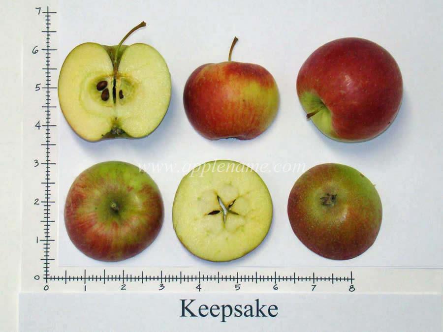 Keepsake apple identification