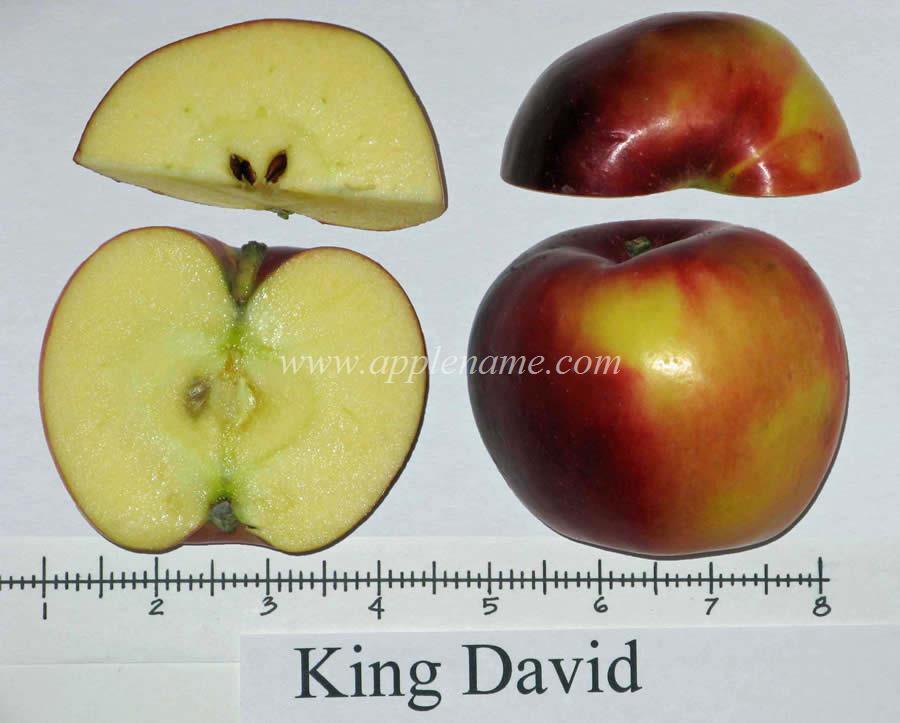 King David apple identification