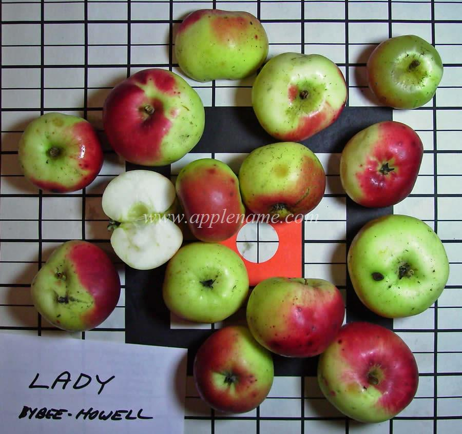 Lady Apple apple identification