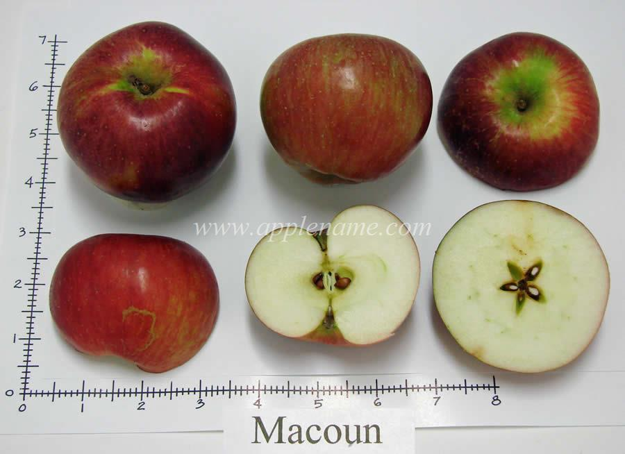Macoun apple identification