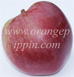 McIntosh apple identification