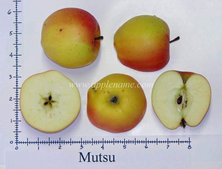 Mutsu apple identification