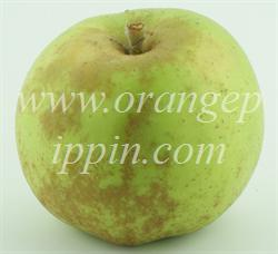 Newtown Pippin apple identification