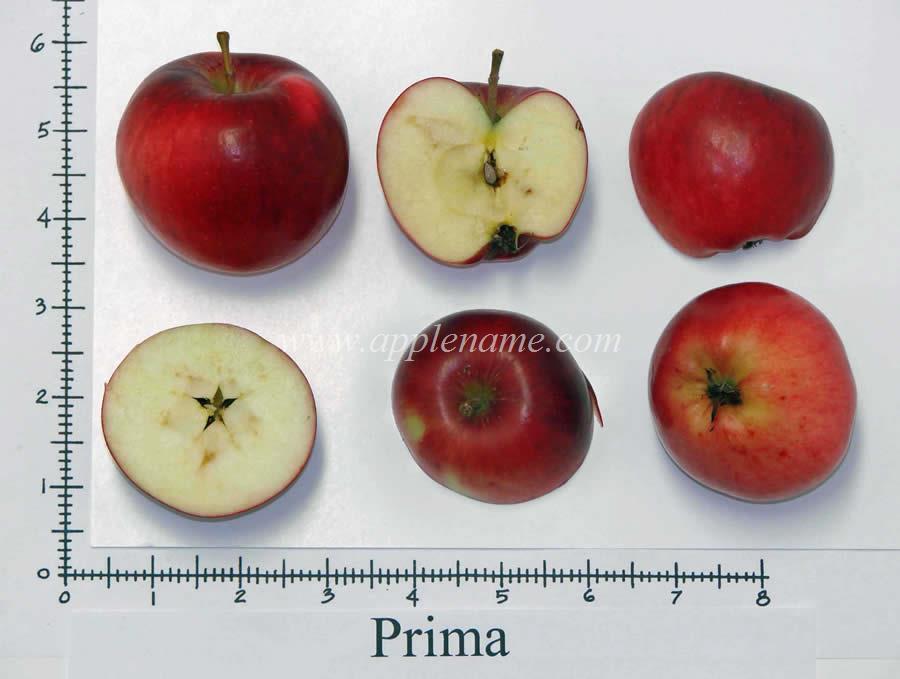 Prima apple identification