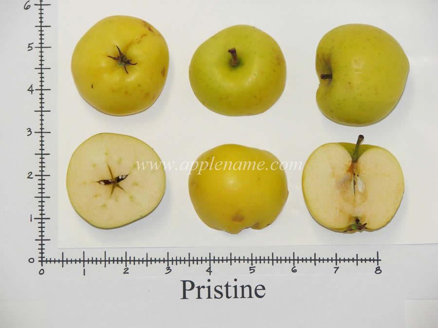 Pristine apple identification
