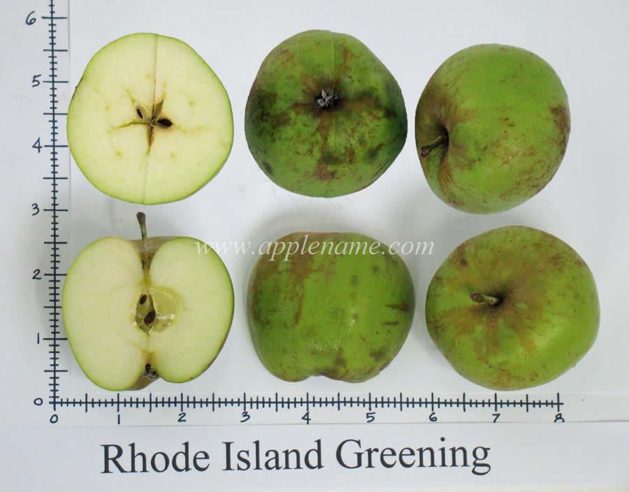 Rhode Island Greening apple identification