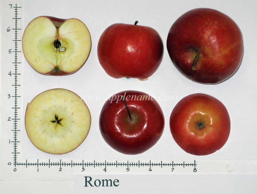Rome Beauty apple identification