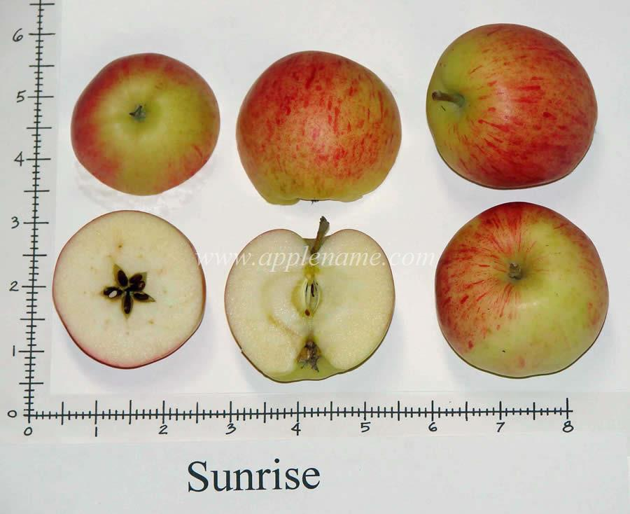 Sunrise apple identification