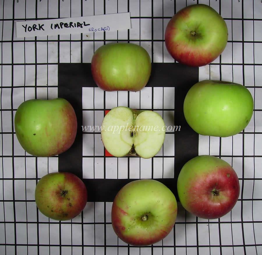 York Imperial apple identification